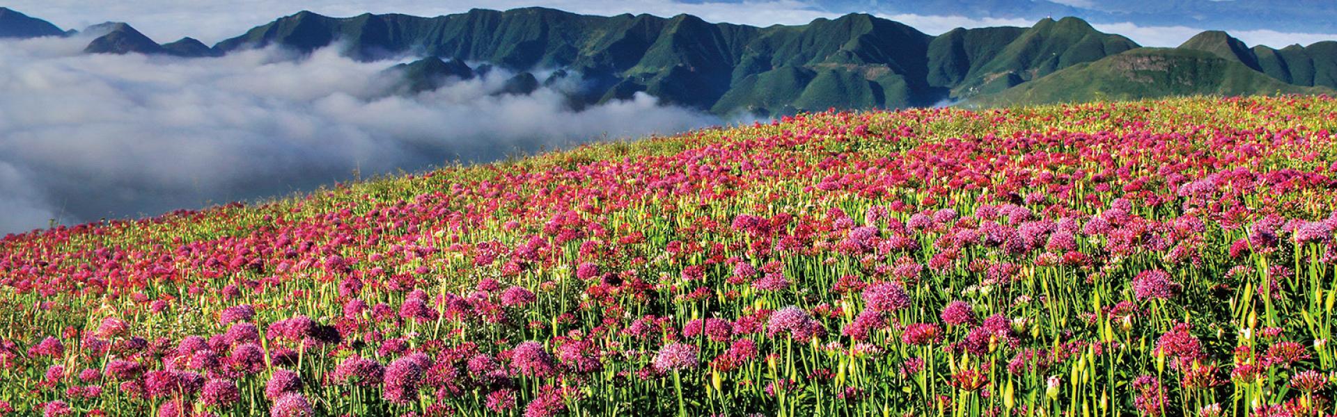 《贵州自驾36计》之第十七计 花海毕节 百里风光看不尽