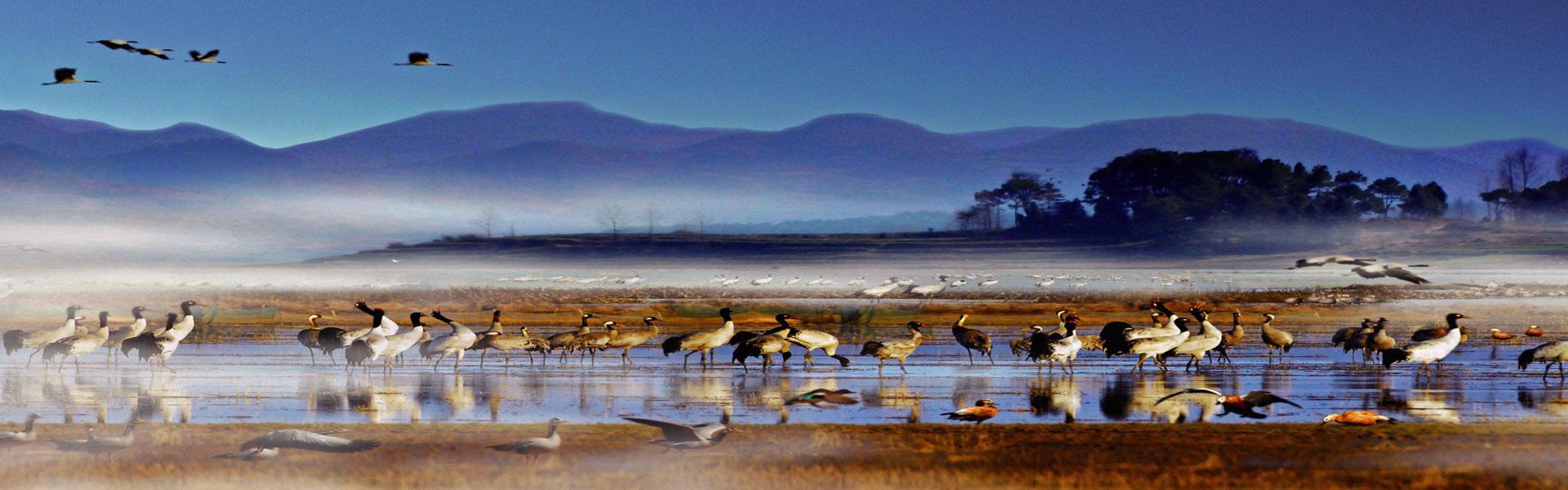 《贵州自驾36计》之第十九计 威宁草海 绿水悠悠候鸟啼